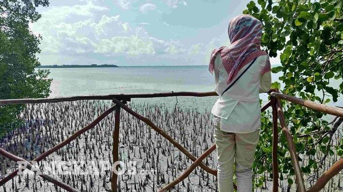 EMPAT Destinasi Wisata Hutan Mangrove di Pulau Bangka yang Menarik untuk Dikunjungi