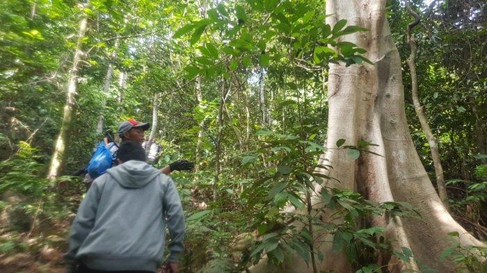 HUTAN - Pelancong menerobos hutan menuju Puncak Pesona Gunung Liang.