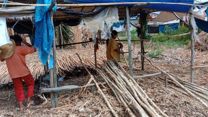 Kampung Pengayuan Lianganggang Banjarbaru, Bisa Lihat Aktivitas Kaum Perempuan Kupas Kulit Galam