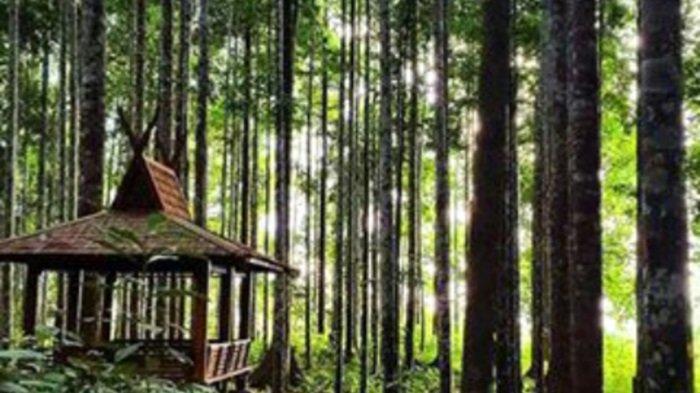 Wisata Kalsel Hutan Meranti Kotabaru, Pengunjung Bisa Lihat Langsung Penangkaran Rusa - Lingkungan-Wisata-Hutan-Meranti-Kotabaru.jpg