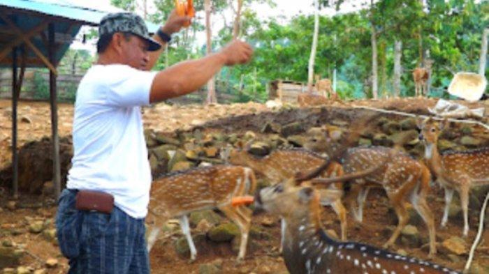 Wisata Kalsel Hutan Meranti Kotabaru, Pengunjung Bisa Lihat Langsung Penangkaran Rusa - Penangkaran-rusa-di-area-Wisata-Hutan-Meranti-Kotabaru.jpg