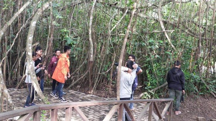Melihat Aktivitas Bekantan dari Dekat Ayo Kunjungi Taman Wisata Alam Pulau Bakut