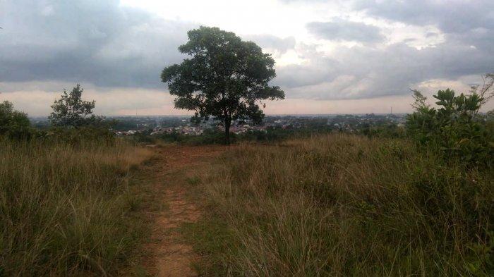 Pohon Ikonik Tempat Pengunjung Wajib Berfoto di Bukit Lentera