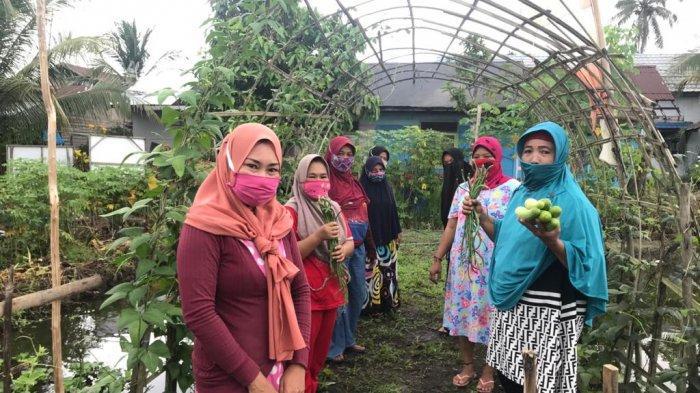 Tanaman Sayur di Agrowisata KRPL Anggrek Banjarmasin Bisa Dipanen Kapan Saja