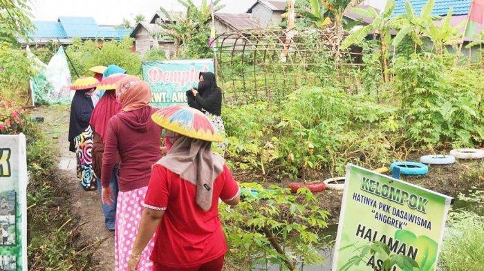 Ini Jenis Sayuran dan Bunga yang Ditanam di Agrowisata KRPL Anggrek Banjarmasin