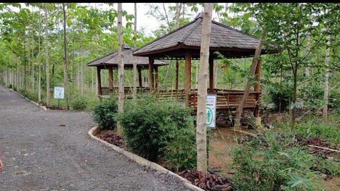 Taman Hutan Hujan Tropis di Area Lahan Perkantoran Pemprov Kalsel Tempat Refreshing Menyegarkan