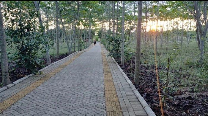 Menikmati Taman Hutan Hujan Tropis di Area Perkantoran Pemprov Kalsel, Keliling Taman 90 Hektare