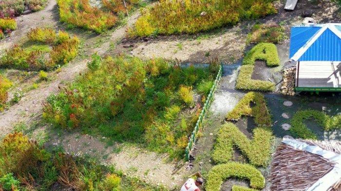 Sempat Viral, Warna Warni Bunga Celosia di Taman Mekarsari Balangan Jadi Pemikat Pengunjung