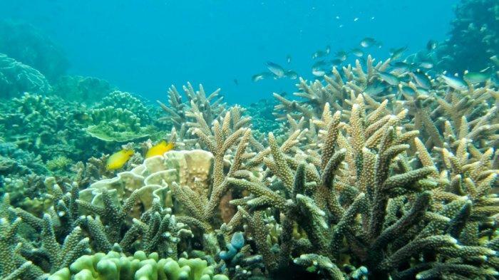 Pengunjung Wisata Kalsel Pulau Samber Gelap Kotabaru pun Disuguhi Ikan Laut Segar Tangkapan Nelayan - pesona-bawah-laut-wisata-kalsel-pulau-samber-gelap-di-kabupaten-kotabaru-03.jpg