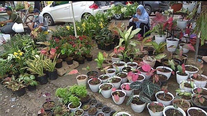VIDEO Berburu Tanaman Hias di Pasar Bunga Jalan Ahmad Yani KM 7 Diakhir Pekan