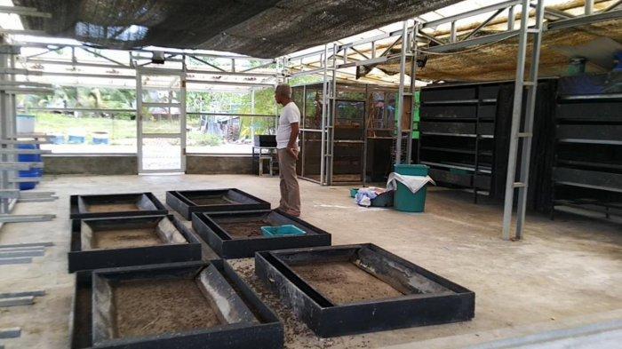 Wisata Kalsel, Training Center Larva Black Soldier Fly Tabalong Aktif Pelatihan Budidaya Ulat Maggot - wisata-kalsel-budidaya-ulat-maggot-di-tabalong-06.jpg