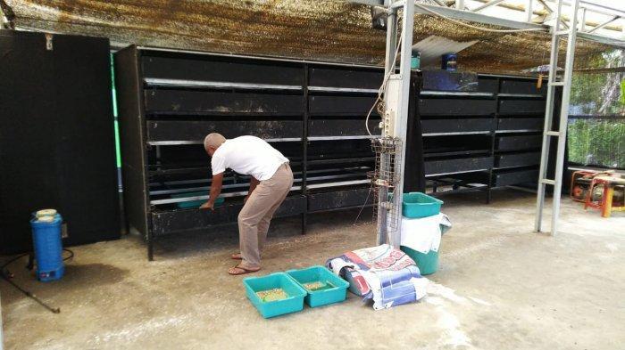 Wisata Kalsel, Training Center Larva Black Soldier Fly Tabalong Aktif Pelatihan Budidaya Ulat Maggot - wisata-kalsel-budidaya-ulat-maggot-di-tabalong-07.jpg