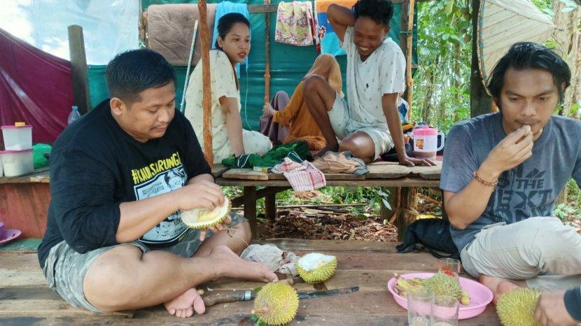 Wisata Mangrove Pulau Burung di Kabupaten Tanahbumbu, Paling Asyik Berburu Buah Durian di Pohonnya