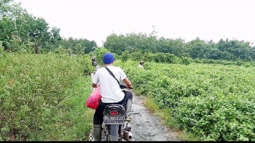 Ini Rute Menuju Kampung Bunga, Jalan Beraspal dan Mulus Meski Sempit