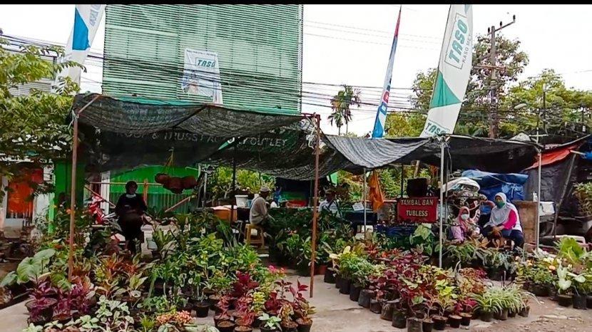 Wisata Kalsel, Tanaman Hias Dari Harga Belasan Ribu Hingga Jutaa di Pasar Bunga