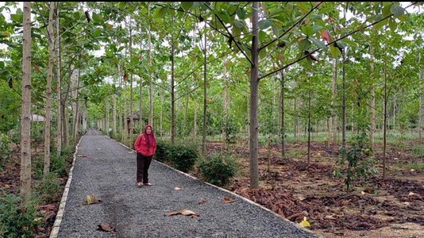 Taman Hutan Hujan Tropis di Area Perkantoran Pemprov Kalsel, Banyak Jenis Pohon Langka Kalimantan