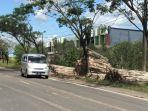 Tumpukan-jualan-kayu-galam-di-tepi-jalan-Lianganggang-Banjarbaru.jpg