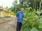 pengelola-taman-mekarsari-khairullah-memerlihatkan-sayur-okra-yang-juga-ditanam-di-taman.jpg