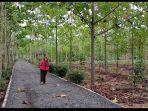 taman-hutan-hujan-tropis-indonesia-di-area-lahan-perkantoran-pemprov-kalsel-di-kota-banjarbaru.jpg