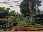 pedagang-tanaman-hias-di-Kelurahan-Bedahan-Kecamatan-Sawangan.jpg