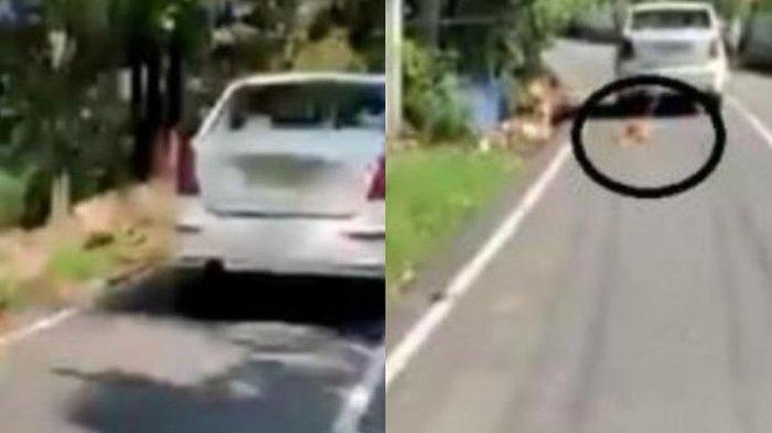 POPULER Anjing Betina Diikat Lehernya & Ditarik Pakai Mobil oleh Pemilik, Endingnya Bahagia