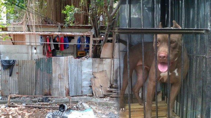 Viral Penampungan Anjing Ilegal Hasil Curian di Jaksel, Berkedok Kios Rokok, Dijaga Ketat Preman