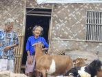 dua-lansia-hidup-serumah-dengan-kambing.jpg