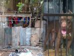 viral-penampungan-anjing-ilegal-semanggi-jakarta-selatan.jpg