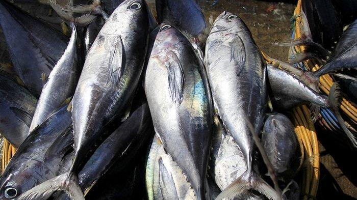 Manfaat Ikan Tongkol yang Kaya Vitamin & Mineral, Ini Rekomendasi Olahan Khas Trenggalek