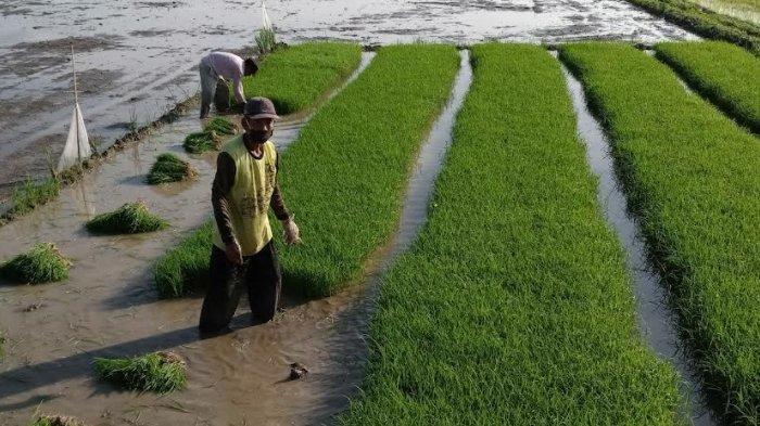 Sektor Pertanian Berkontribusi Besar Dalam Pembangunan, Pemkab Nganjuk Ajak Semua Pihak Kerja Bareng