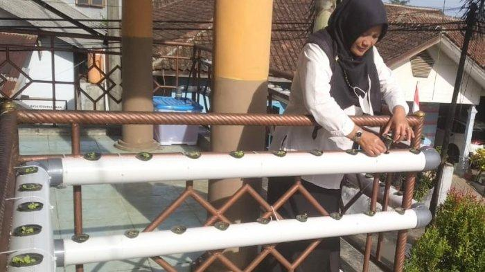 Kegiatan di Sekolah Vakum, Guru SDN 2 Sukorejo Kendal Tanam Sayur Hidroponik di Depan Ruang Kelas