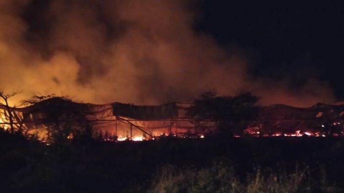 Anggota DPRD Pati Rugi Miliaran Rupiah, Kandang Ludes Terbakar Ribuan Ayamnya Mati Terpanggang