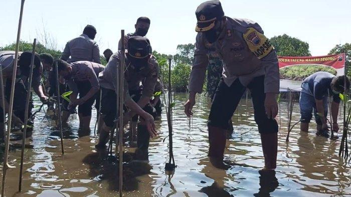Lanjutkan Program Mageri Segoro, Polres Pekalongan Kembali Tanam Ribuan Bibit Mangrove di Pantai