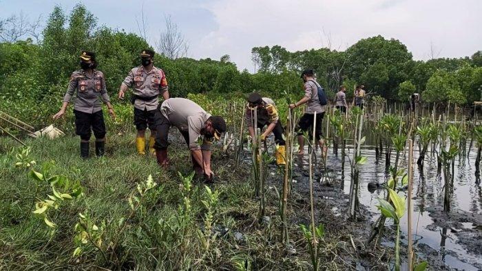 Polres Pekalongan Mageri Segoro, Tanam 3.000 Pohon Mangrove di Pantai Depok dan Wonokerto