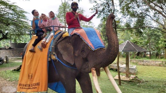 Keindahan Taman Bunga Celosia dan Serunya Naik Gajah, Andalan Objek Wisata Linggoasri Pekalongan