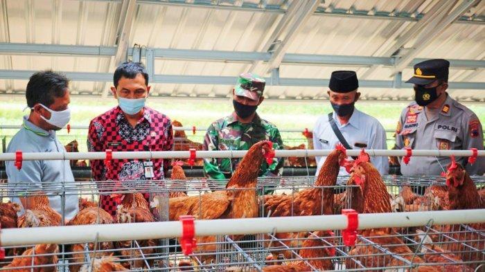 Bantu Peternak Ayam Petelur dan Masyarakat Tedampak Covid-19, Cargill Indonesia Gelontor Rp1,7 M