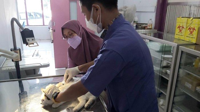 Warga Kota Tegal Antusias Daftarkan Kucing Peliharaannya Suntik Vaksin Rabies
