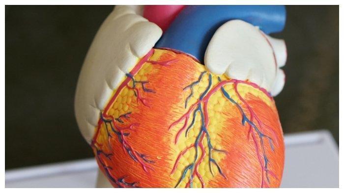 Bolehkah Penderita Penyakit Jantung Mendapatkan Vaksinasi Covid-19?