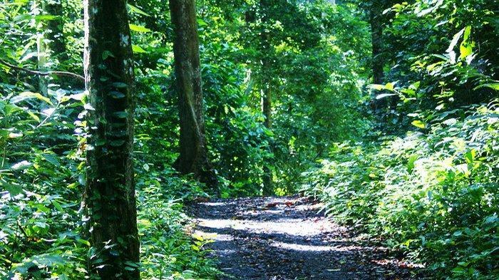Menikmati Hijaunya Taman Wisata Alam Gunung Meja, Kawasan Hutan Lindung di Manokwari Papua Barat