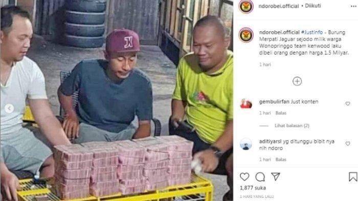 Viral Video Merpati Laku Terjual dengan Harga Rp 1,5 Miliar, Awalnya Ditawar Rp 600 Juta