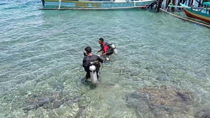 Komunitas Ketapang Dive Kwawi Lakukan Transplantasi Terumbu Karang di Teluk Doreri
