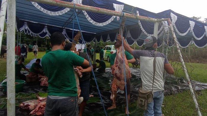 Prokes Covid-19 Diperketat saat Penyembelihan Hewan Kurban di Manokwari