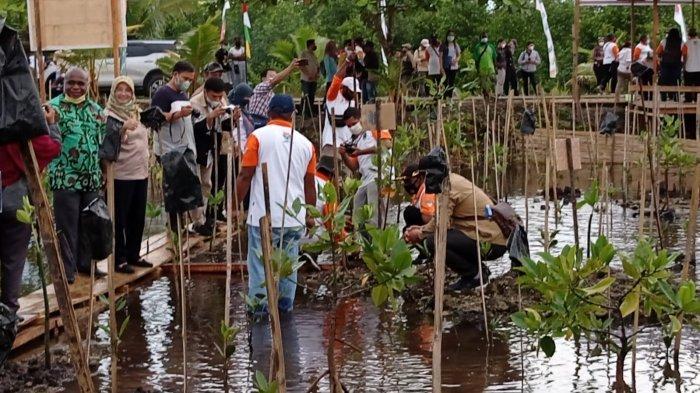 Cegah Emisi Karbon, Pemkot Sorong Gencar Lakukan Rehabilitasi Mangrove