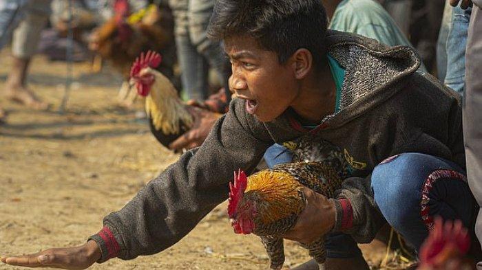 Cerita Rakyat NTT : Mane Ikun Si Putera Bungsu dari Kabupaten Belu