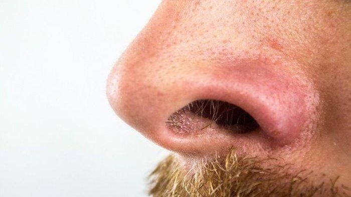 ilustrasi mencukur bulu hidung