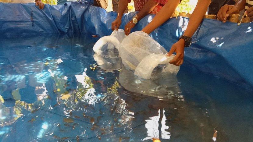 Tips Praktis Budidaya Ikan Lele dan Ikan Nila, Gampang Dilakukan