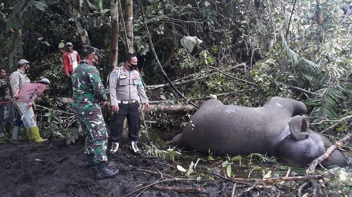 22 Gajah Mati, Gading Hilang dan Hutan Dibakar Pemburu