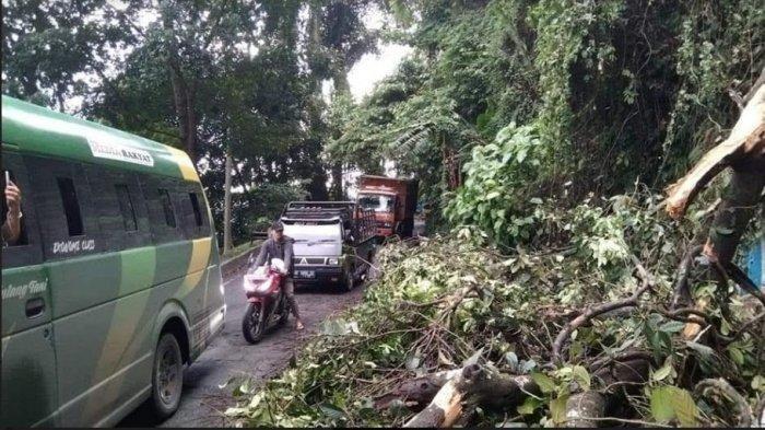 Pohon Tumbang di Kawasan Tirtanadi Sibolangit, Arus Lalu Lintas Medan-Berastagi Macet