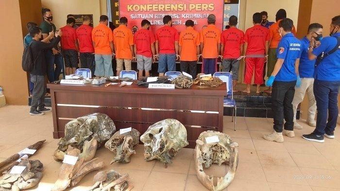 Polisi Ringkus 11 Tersangka Pembunuh Lima Ekor Gajah