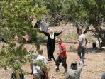 kebun-zaitun-israel-palestina.jpg